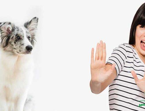 چرا برخی افراد از سگ می ترسند؟