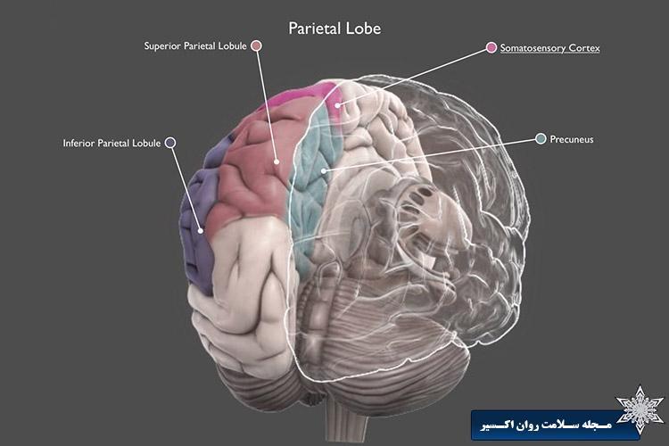 مغز افراد دچار اختلال ریاضی
