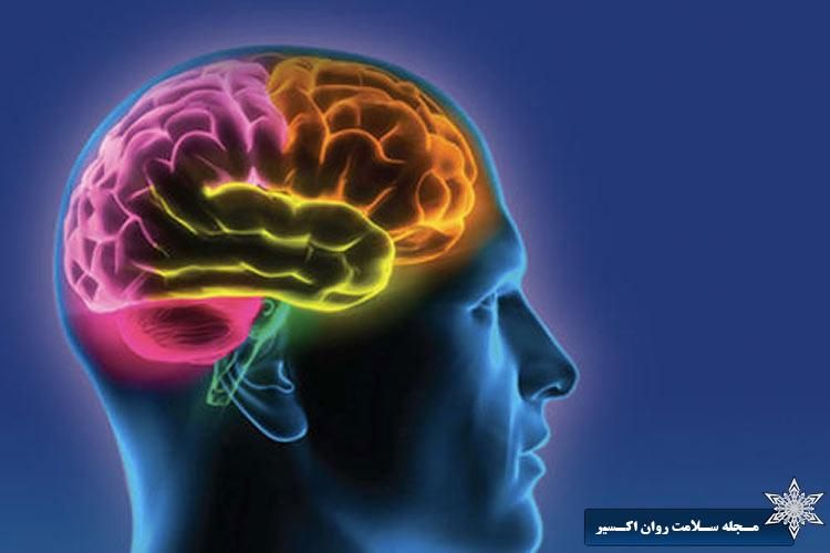 تحقیقات جدید در مورد نوروپلاستیسیتی