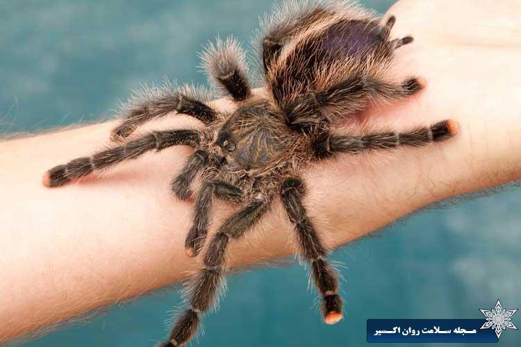 فوبیا عنکبوت